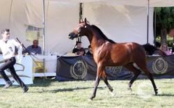 جمعية مربّي الخيول العربية تعلن عن إنشاء مركز الإمارات اللبنانيّ للفروسيّة
