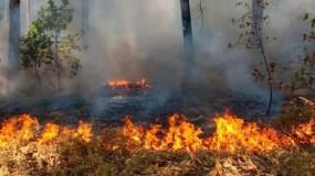 حريق يلتهم أكثر من 300 شجرة في جنين
