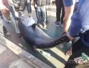 اصطياد سمكة ضخمة قبالة سواحل قطاع غزة