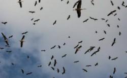 """""""التعليم البيئي"""": سماء فلسطين تشهد عبور 500 مليون طائر سنويًا"""
