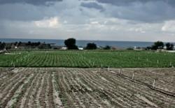 سلطة الأراضي بغزة تصدر تحذيريًا بشأن الأراضي المُستأجرة شمال القطاع