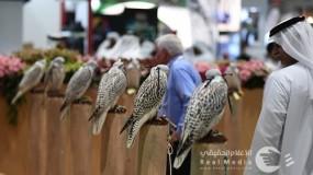 """""""للمرّة الأولى في تاريخ الحدث. . تحويل معرض أبوظبي الدولي للصيد والفروسية إلى مهرجان شامل يمتد لـِ 7 أيام"""""""