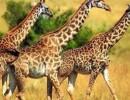 ثلثا الحيوانات البرية في العالم انقرضت في أقل من 50 عاماً