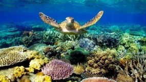 علماء يكتشفون سبباً جديداً لتدهور الحاجز المرجاني الكبير