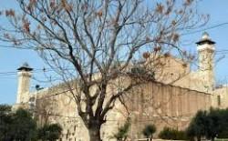 تونس: المجلس الاستشاري للتنمية الثقافية في العالم الاسلامي يناقش اقتحام ريفلين ونتنياهو للحرم الابراهيمي